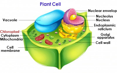 Cell Membrane, Chromosomes and Chromatin, Nuclear Envelope ...
